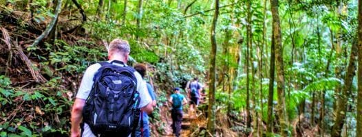 Hiking at Tijuca Forest