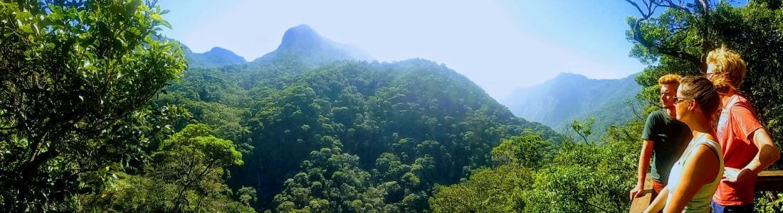 Tijuca Forest Easy trail hike
